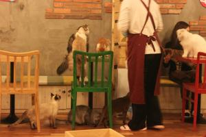 Godabang cat café in South Korea
