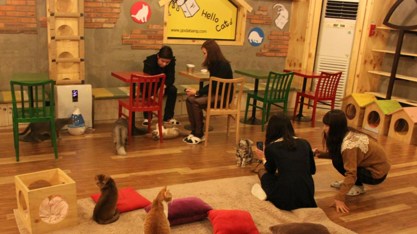 Cat café - godabang.com in South Korea
