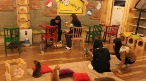 Cat café - godabang.com in South Korea